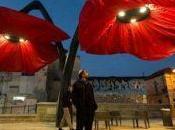 Gerusalemme: Quattro papaveri giganti illuminano città!