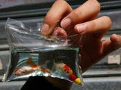 Cina animaletti vivi chiusi sacchetti plastica