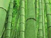 Strumenti bambù furono probabilmente alternativa alla pietra Asia