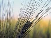 L'importanza un'agricoltura biodinamica