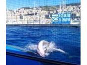 Acquario Genova: Consigli Parcheggio, Biglietti, Visita alla Città