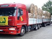 Amatrice, Coldiretti dona 50mila chili paglia sostenere l'alimentazione bovini