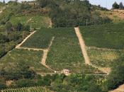L'Oltrepò Pavese, marmellata more muschio spalmata ricordi.