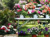 Giardini Volturno. Mostra mercato