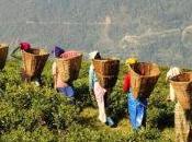 India: Sikkim primo Stato 100% bio!