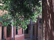 Ghirlanda semplice olivo