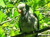 Parco Nazionale Iguazù, luogo dalla bellezza indescrivibile avvolgente.