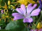 erbe, fiori e... magie estive