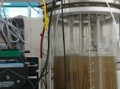 """Scoperti microbi mangia ferro potrebbero limitare efftti """"serra"""""""