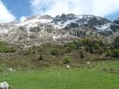 Cornalba Monte Alben.