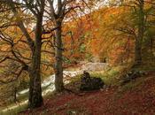 Lungo dorsale della Resia pensieri d'autunno