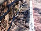#buccinasco: fallimento green system, comune creditori lavori della pista ciclabile gudo gambaredo