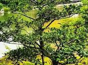 Padiglione d'Oro Kyoto bellezza mistero