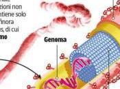 Respirare virus