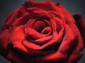 """ROSANTIDE nuovo libro Marina Pratici, poetessa delle rose""""."""