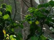 Garcinia Cambogia dimagrimento