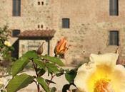 Rose Borgo: corso sulle rose