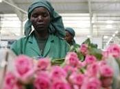 Valentino fiori Fairtrade: segno d'amore rispetto anche l'ambiente diritti delle coltivatrici