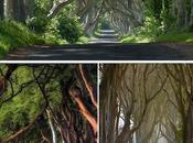 Dark Hedges spettacolare viale Irlandese