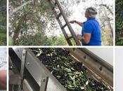 nuovi olii Pujje Puglia BIstrot