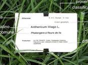 Come leggere l'etichetta delle piante