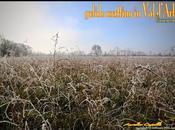 gelido mattino d'Arbia