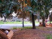 storia incredibile Parco della Resistenza. villa viene pulita volta l'anno