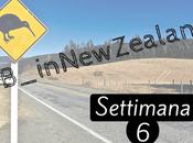 #B_inNewZealand Settimana