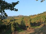 Monferrato confine: tradizioni vinicole Torinese Astigiano