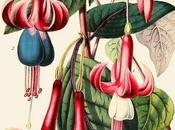 Illustrazioni botaniche: bellezza delle piante, ieri oggi