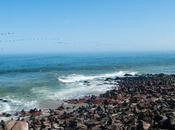 viaggio lungo Skeleton Coast