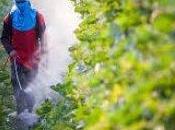 pesticidi uccidono 200.000 persone ogni anno