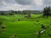 Viaggio nozze Bali prima volta Est)