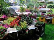 Cervia, maggio settembre mostra d'arte floreale grande d'Europa