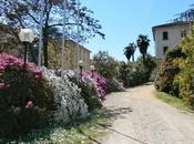 """Buongiorno bella foto Giovanni Saturnino, primavera irrompe Biblioteca Luino"""""""