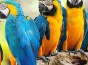 Cornetto&Cappuccino. dramma delle parolacce pappagallo