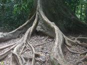 Malaysia giornata parco