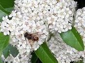 Un'ape ribelle
