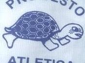 Tartaruga Sesto