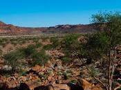 incisioni rupestri Twyfelfontein