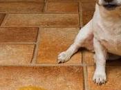 Come evitare vostro cane faccia pipì casa
