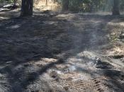 Roma terzo mondo: condizioni, imbarazzanti, delle proprie aree verdi. insulto alla buona amministrazione!