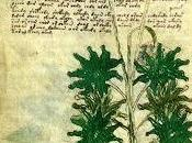 scritto misterioso Codice Voynich?