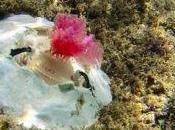 Liguria: Alghe stampate studiare cambiamenti climatici!