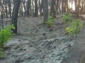 Vesuvio, miracolo della natura: quasi mesi dagli incendi torna vita