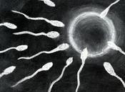 mondo occidentale drastica diminuzione conteggio spermatico