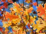 L'Equinozio d'autunno oggi