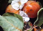 frutto millenario: Cachi, #seguilestagioni