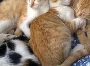 Maltrattamenti animali, pene gravi Regno Unito: rischiano cinque anni prigione