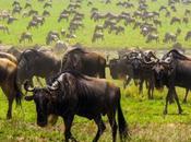Safari Africa, consigli utili viaggio emozionante